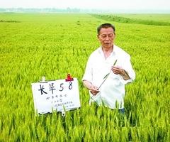 """86岁了,他仍""""泡""""在试验田里 ——记全国小麦育种专家梁增基(图)"""